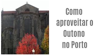arvores de Outono no Porto