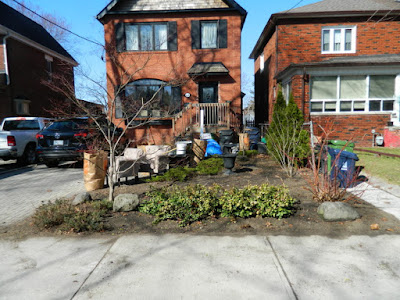 Bloor West Village Front Yard Spring Cleanup After by Paul Jung Gardening Services--a Toronto Organic Gardener