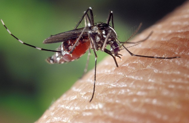 What Happens to Your Body When a Mosquito Bites You