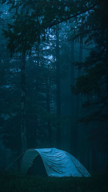 HD Wallpaper Scene, Camping, Forest, Fog, Nature