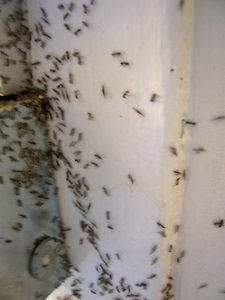 Herbal Health Care Homemade Natural Ant Killers
