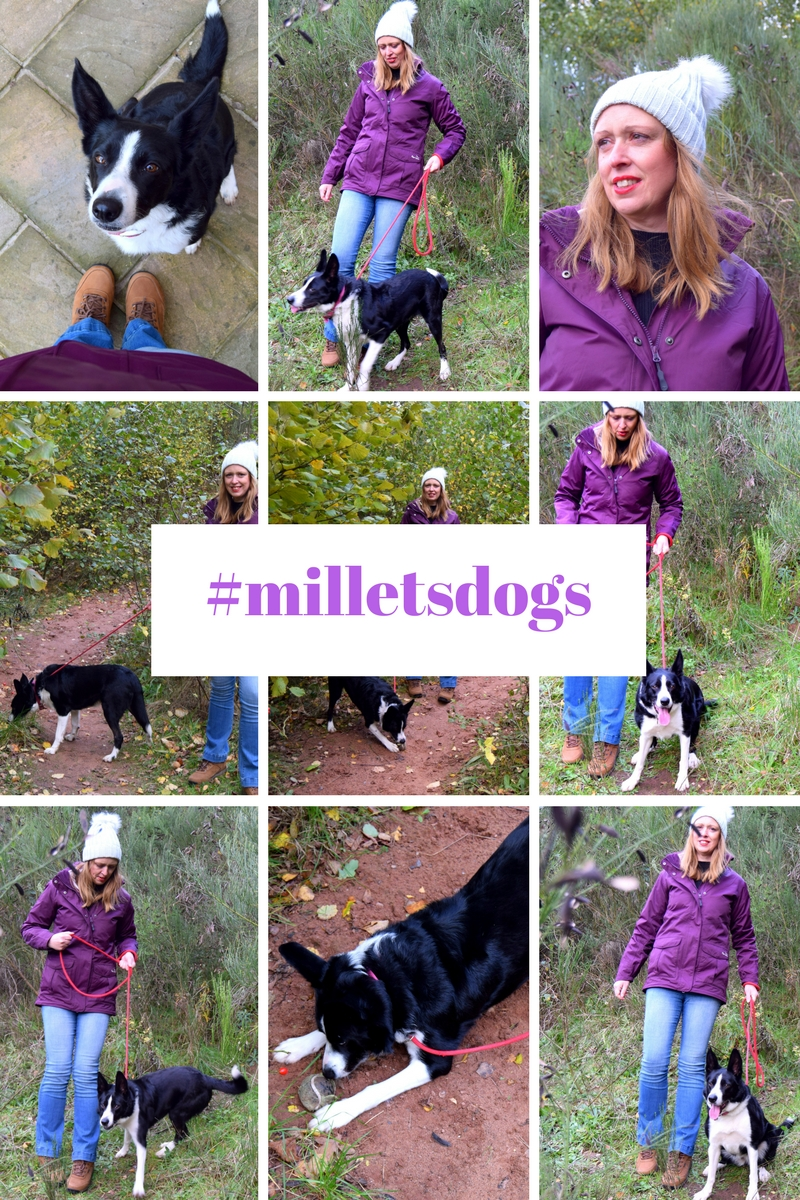 Whatever The Weather #Milletsdogs