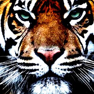 Jimat Asmak Khodam Harimau