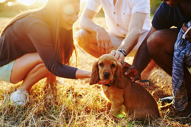 Socializing Your Puppy – How to Do it Properly