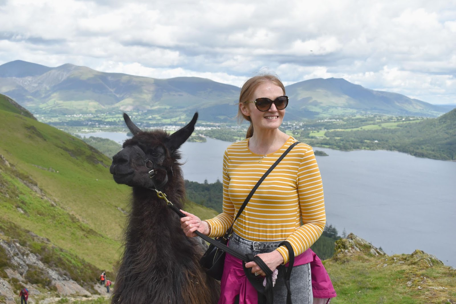 Valentines Ideas in the North East - Llama Trek