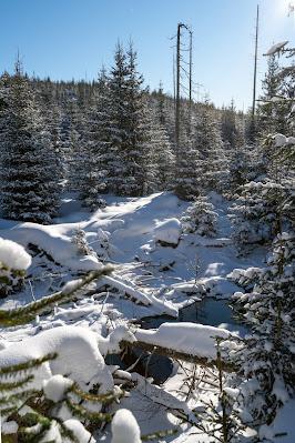 Winterwandern Mauth-Finsterau  Reschbachklause – Siebensteinkopf  Nationalpark Bayerischer Wald 08