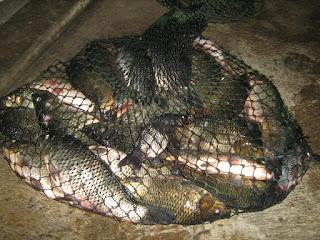 Umpan-Ikan-Tombro-Malam-Hari