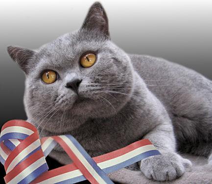 [صورة مرفقة: cat01.jpg]