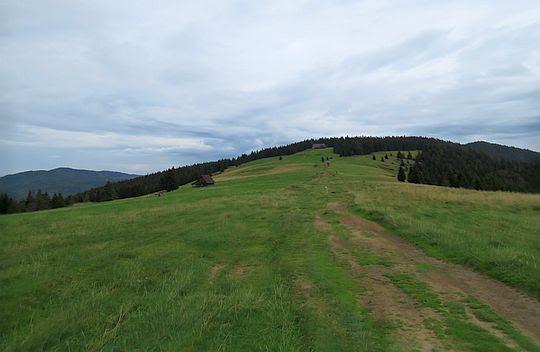Przełęcz Długa. Widok w kierunku Metysówki.