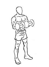 biceps curls