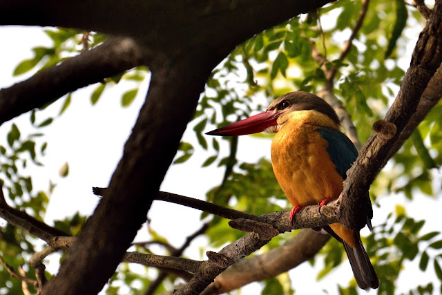 Birds of samshernagar sundarban tourism