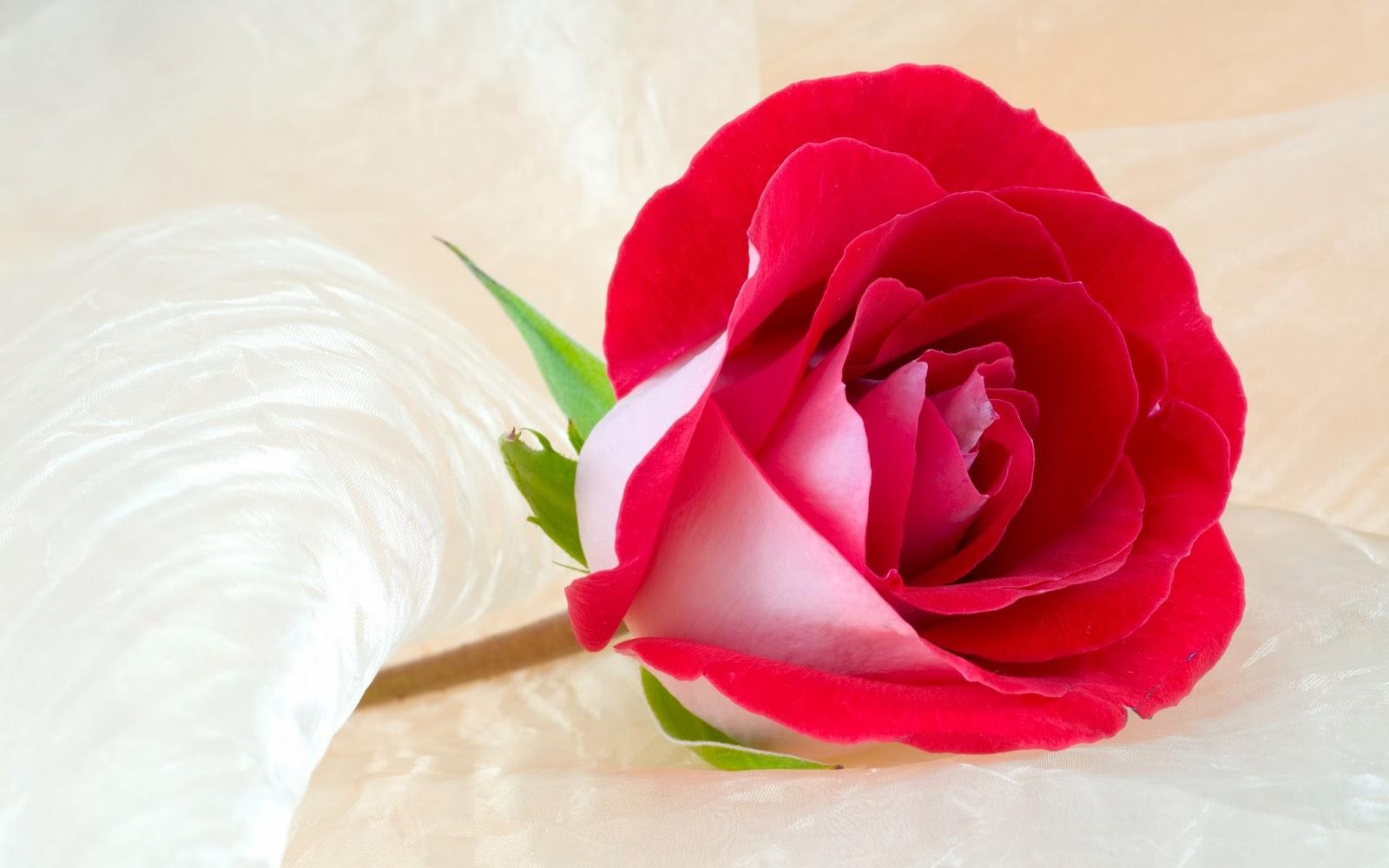 Best 10 Beautiful Flowers Fresh HD Wallpapers 2014