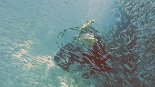 John Pennekamp State Park Diving