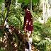 Warga Pamah Geger, Bolang Tigan Ditemukan Gantung Diri di Pohon Coklat