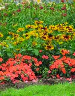 Colorful flower bed.