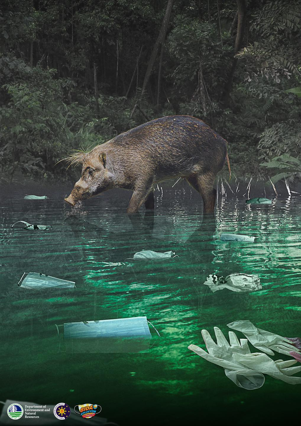 wild boar in river drinking with face masks and medical wastes