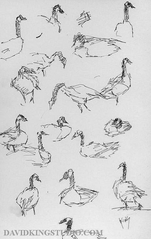 art sketch life pen geese goose bird wildlife