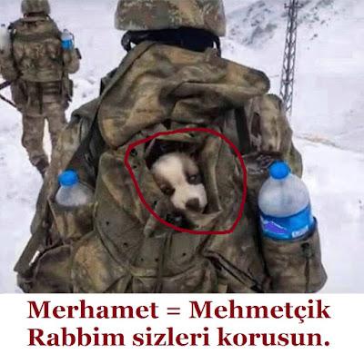 merhamet, mehmetçik, türk, türk askeri, tezkere, dua, operasyon, kış operasyonu, terör, güvenlik, peygamber ocağı, silah, güven, köpek, dağ,