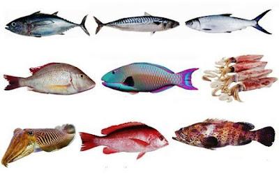 supplier udang, ikan laut, ikan tawar di jakarta