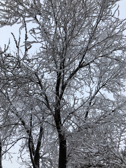 snow covered branches of a tree
