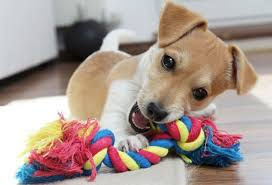 In Choosing a Toy For Dog And Pups