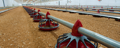 Geothermal Heating Pays Off for Local Chicken Farm