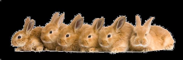 tube de muchos conejos
