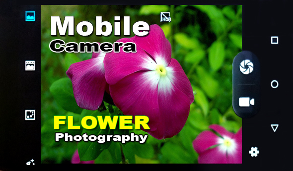 Flower Photography - Images Shot Using mobile Phone - Mobile Photography,Flower Photography - 90+ Images Shot Using mobile Phone - Mobile Photography