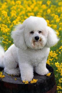 تحميل صور كلاب روعة جدا ، احلى صور خلفيات كلاب جميلة hd صورة كلب 2021