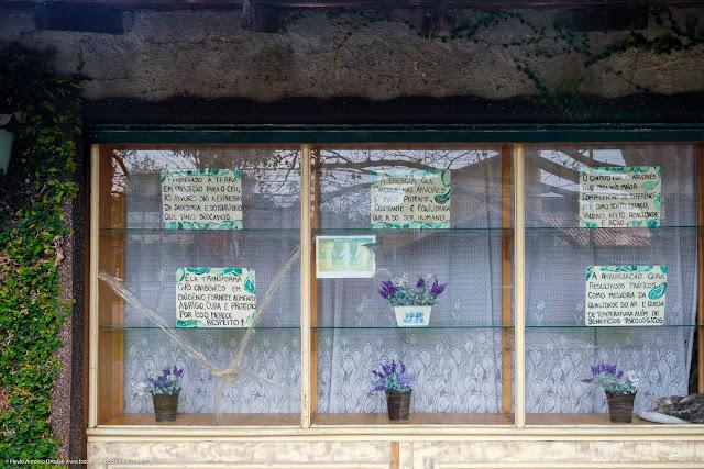 Vitrine com vasos de flores e cartazes falando de árvores e suas qualidades