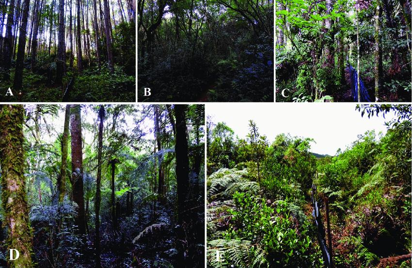 Floresta Nacional de Piraí do Sul | Paraná