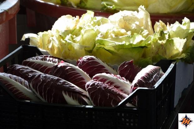 Radicchio Rosso di Treviso e Variegato di Castelfranco IGP, lavorazione nell'azienda agricola Dotto