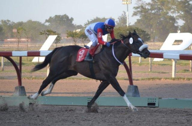 Gran Faro Grand Reward La Plata