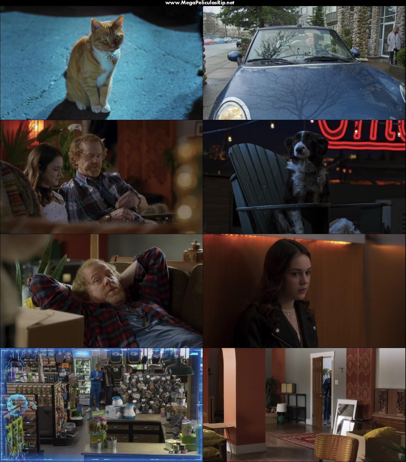 Como Perros Y Gatos 3 1080p Latino