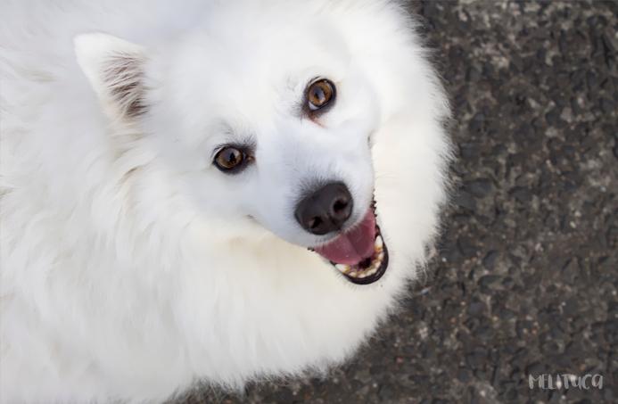 Mejora tus fotografías consejos I retrato perro