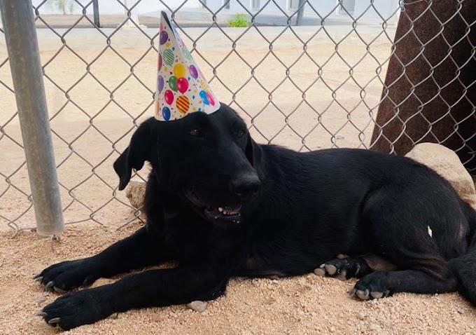 ¡Del albergue salieron 36 perritos para adopción!