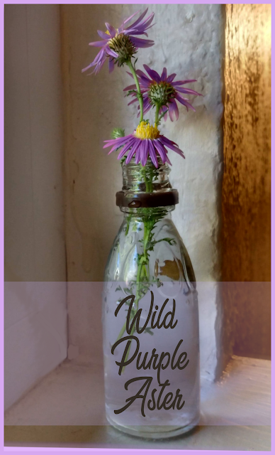 wild_aster_in_vase