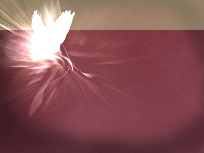Free Cool Wallpapers: Dove Wallpapers