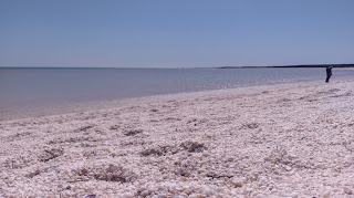 Plaża z samych muszelek