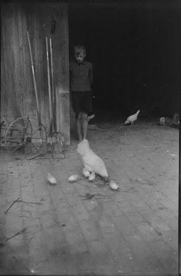 Hühnern vor Scheune - 1930-1950