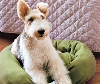 Köpeğiniz için Pet Yatak Yapımı