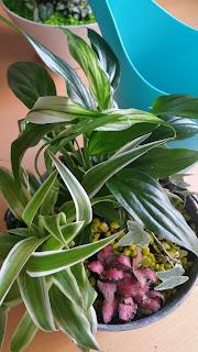arrossage-bleu-plantes-vertes-composition