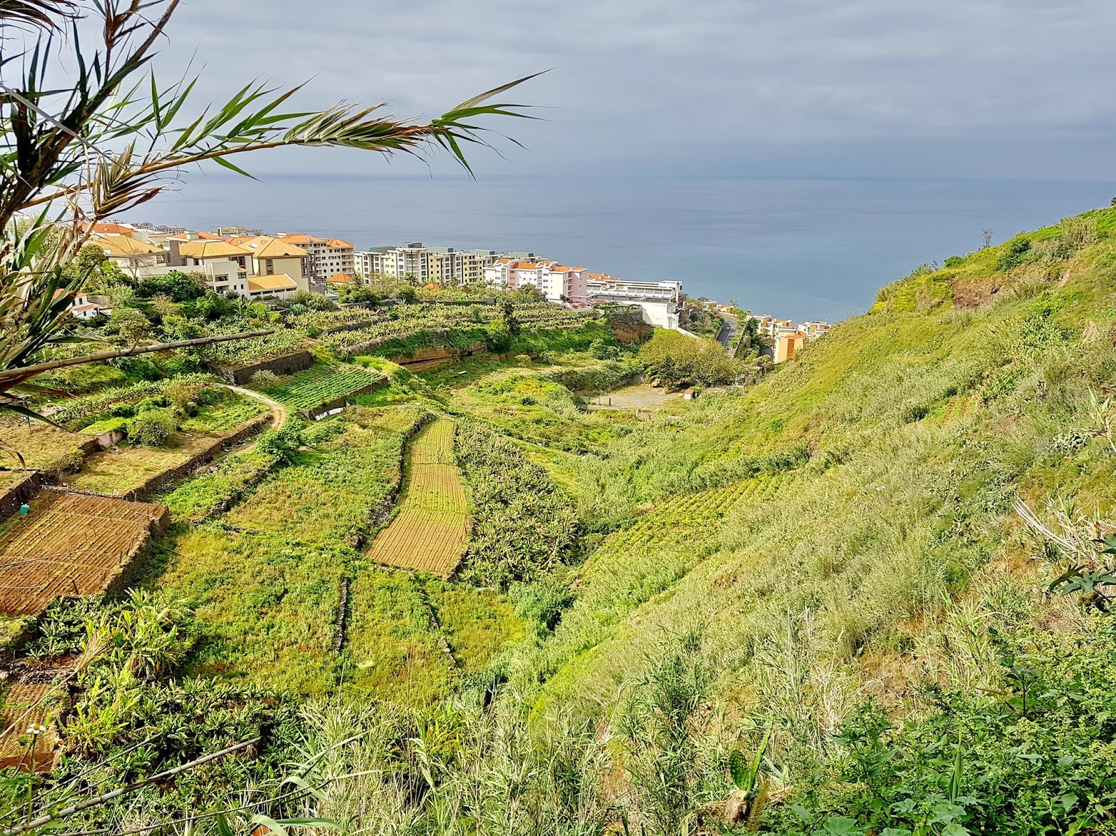 verde a norte da Praia Formosa