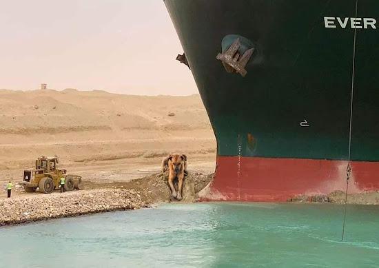 Dùng chó để đào cát hai bên thân tàu ever given