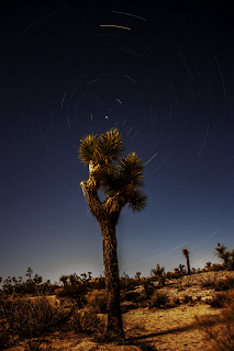 startrails joshua tree national park