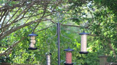 Vida silvestre. Cuándo y cómo alimentar a los pájaros del jardín