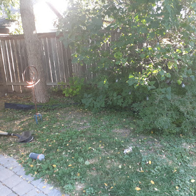 Toronto Dufferin Grove New Garden Makeover Before by Paul Jung Gardening Services--a Toronto Organic Gardener for Hire