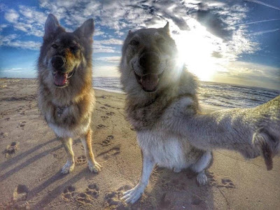 Dogs take a selfie photo on the beach
