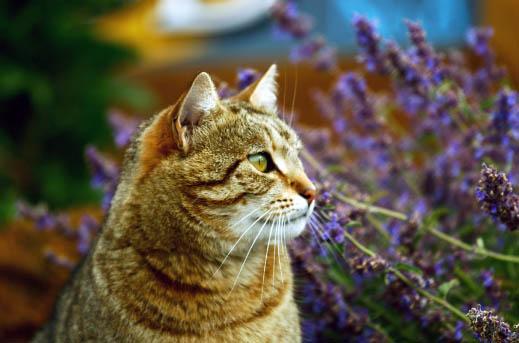 Jakich zapachów nie lubią koty?