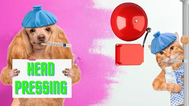 Head Pressing: Un Comportamiento Peligroso De Tu Mascota